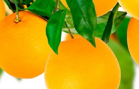 fruta-fresca_naranja2