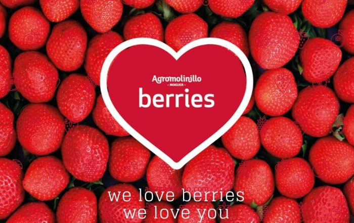 agromolinillo_berries