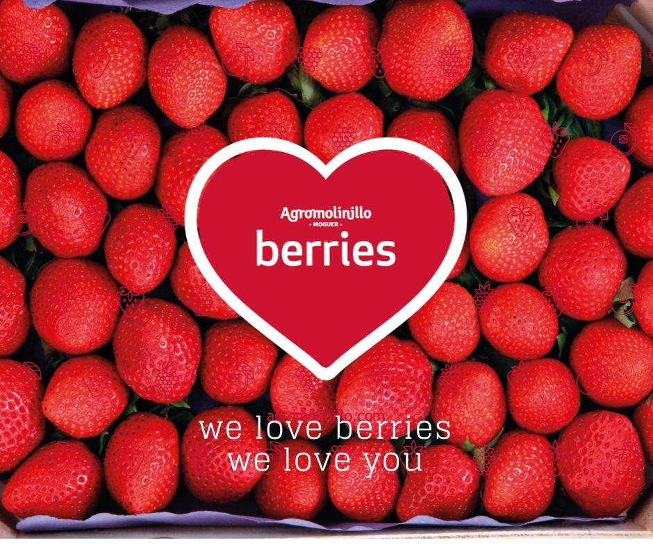 agromolinillo_berries